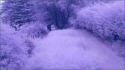 default_color.jpg