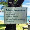 advice_from_a_tree.jpg